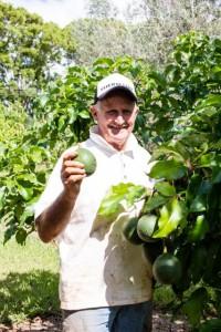 John picking Fuerte avocados